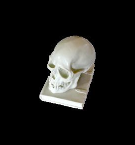 teschio con libro in marmo bianco, 25 cm